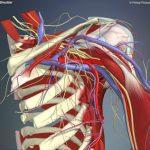 Interactive shoulder - shouder - L16F1