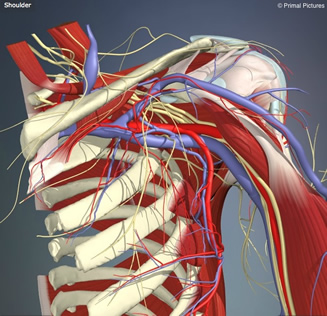 Treatment of shoulder pain utilizing mechanical diagnosis and therapy principles