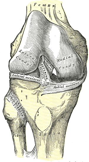 Recent Advances In The Rehabilitation Of Anterior Cruciate Ligament