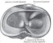 Surgery versus physical therapy for a meniscal tear and osteoarthritis.