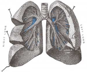 Recent advances in the management of pulmonary embolism: focus on critically ill patients