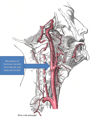 Roger Kerry and Alan Taylor to be Topic Experts on the Cervical Arterial Dysfunction page