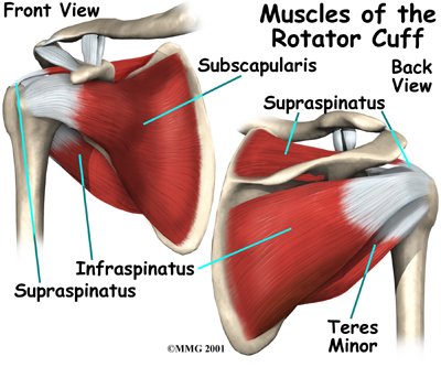 The Efficacy of Manual Therapy for Rotator Cuff Tendinopathy