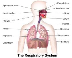 Respiratory management of spinal muscular atrophy type 2