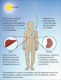 Vitamin D deficiency is associated with increased fecal incontinence symptoms