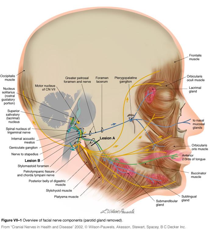 cerebral stimulation machine