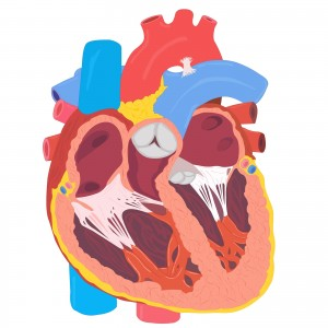 Electrical and structural adaptations of the paediatric athlete's heart: a systematic review with meta-analysis.