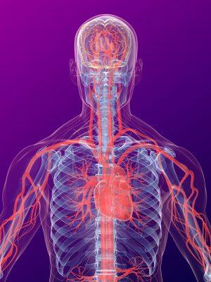 Exercise-based cardiac rehabilitation in heart transplant recipients.