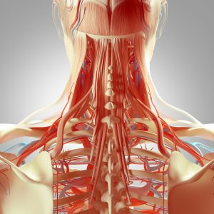 Effectiveness of Physiotherapy interventions plus Extrinsic Feedback for neck disorders: A systematic review