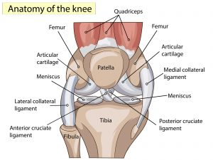 Alterations in mechanical properties of the patellar tendon is linked with pain in athletes with patellar tendinopathy.