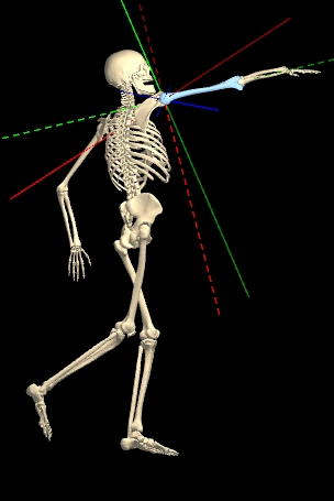 KineMan Complements the PP Anatomy Project