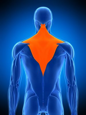 Effects of pulling direction on upper trapezius and rhomboid muscle activity