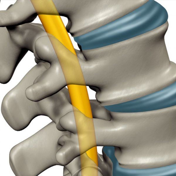 Introduction to Spinal Cord Injury